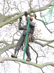 Removal of Dead and Dangerous Trees